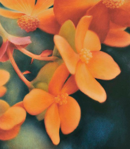 Christine Johnson - Begonias #15 (2012)