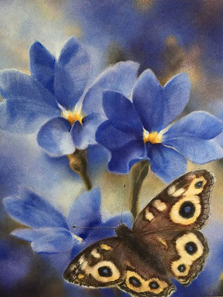 Christine Johnson - Meadow argus on blue dampiera (2017)