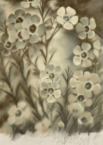 Christine Johnson - Geraldton wax flower (2014)